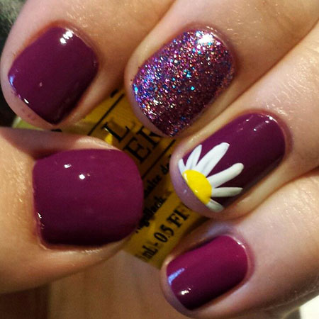 Polish Daisy Spring Flower